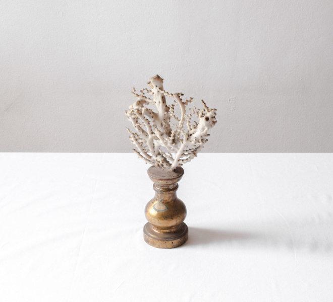 web_8. Jacopo Valentini from the series Vis Montium (Corallo collezione Spallanzani #1), 2019